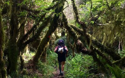 Forest track North Island