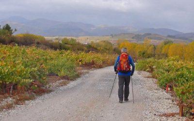 Camino header