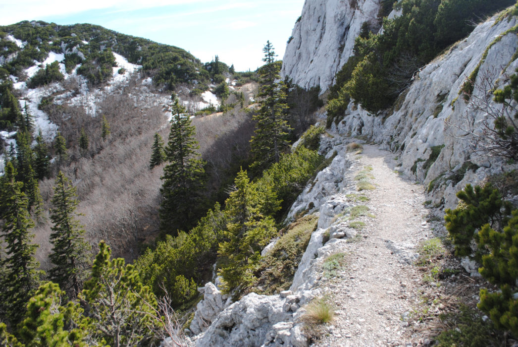 Premusiks Incredibly Built Trail