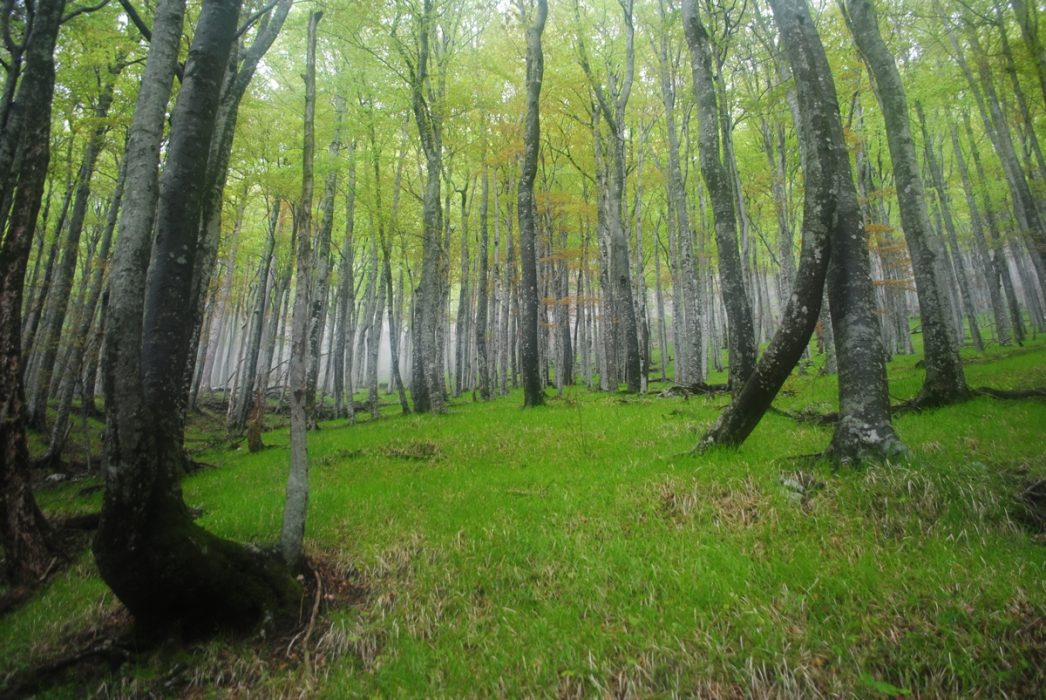 The Beech Forests On The Way Down Into Paklenica Canyon