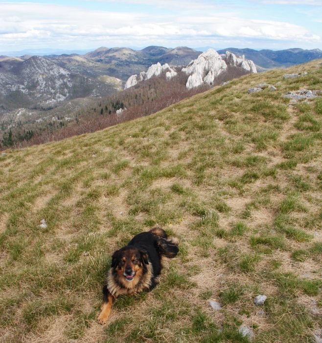 The Dog And Bacic Kuk From Budakovo Brdo