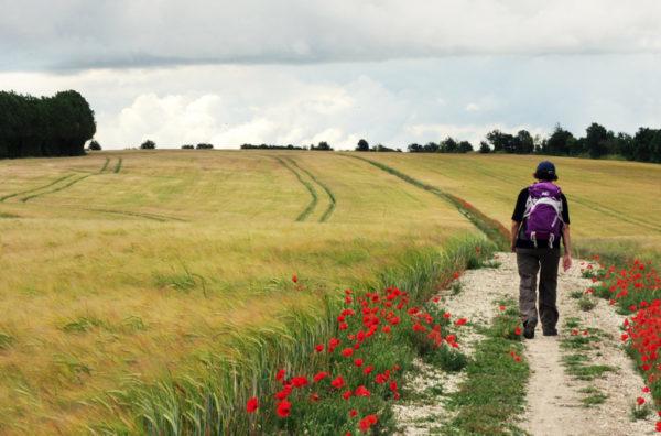 Contours Walking Holidays Poppy Field