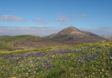 Walking on Lanzarote with a Cicerone Guide