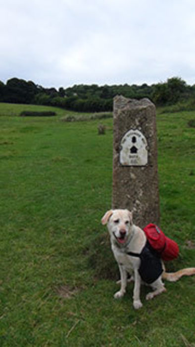 Half Way Along The Cotswold Way