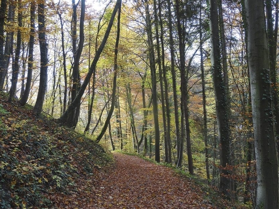 Trekking The Westweg Or Westway Through Germanys Black Forest