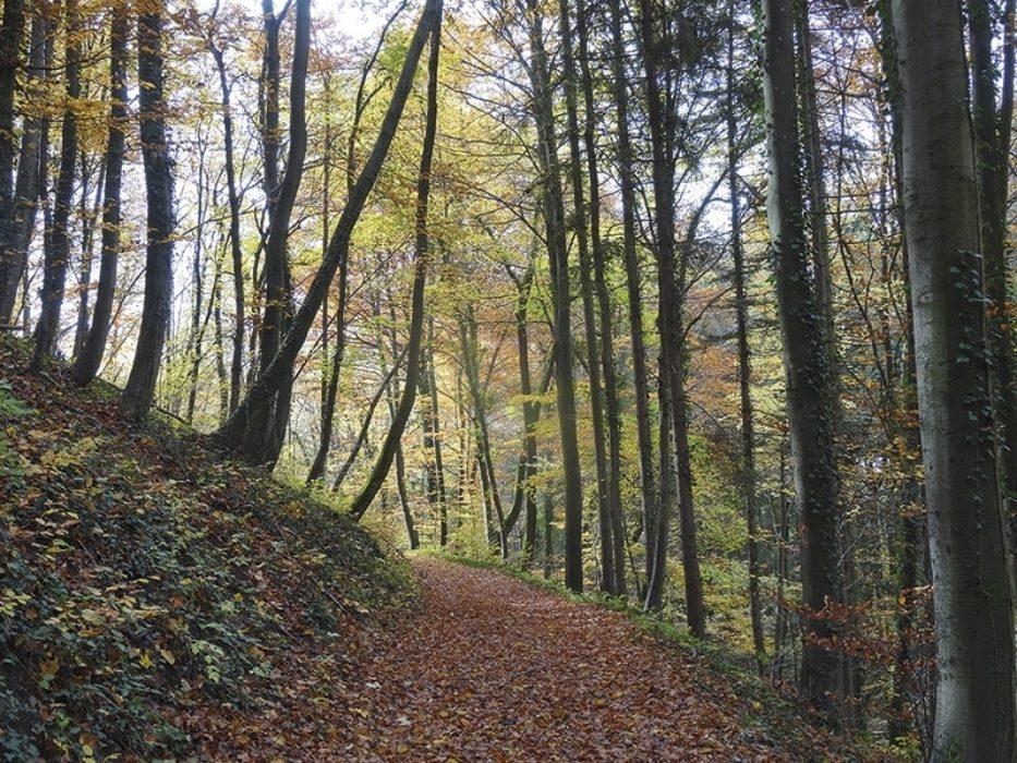 Trekking The Westweg Or Westway Through Germanys Black Forest