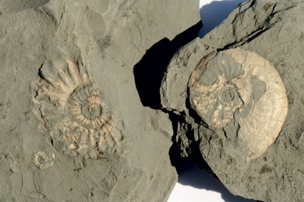 Fossil Finding On The Jurassic Coast