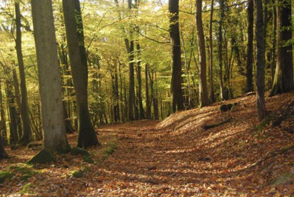 Autumn In Highmeadow Woods
