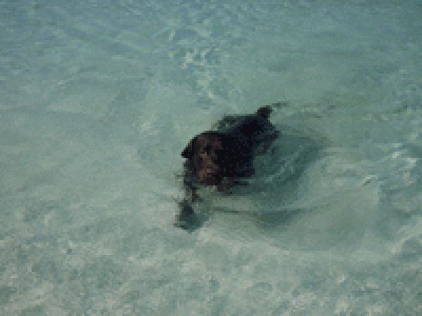 Peter Edwards Dog Enjoying A Swim -Isle of Harris
