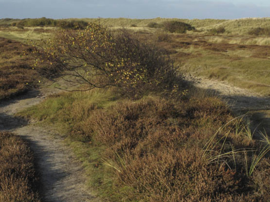 Winterton Dunes Nature Reserve A Haven For Birds And Natterjack Toads