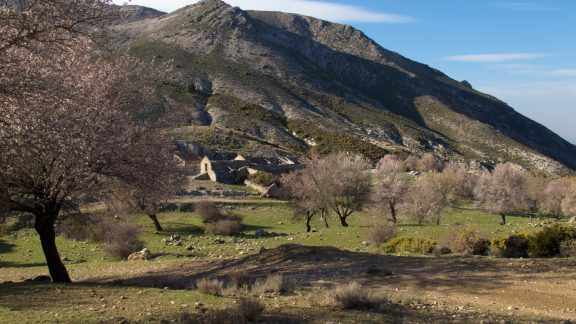 Almond trees surround the Haza del Aguadero ruined farm in the Sierra Tejeda