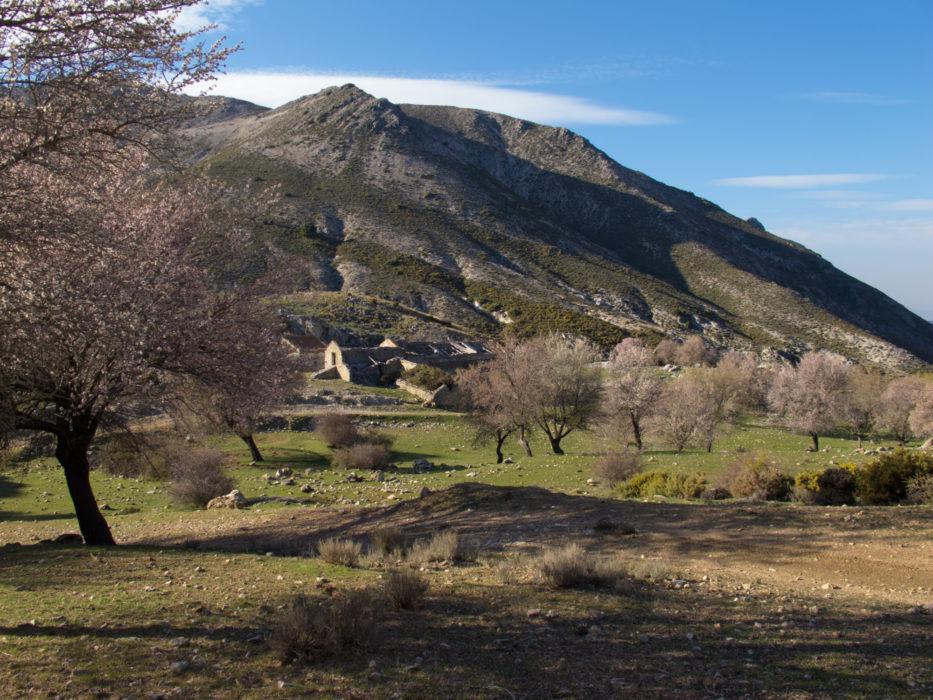 Almond trees surround the Haza del Aguadero ruined farm in the Sierra Tejeda