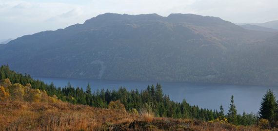 Pine trees above Loch Ness