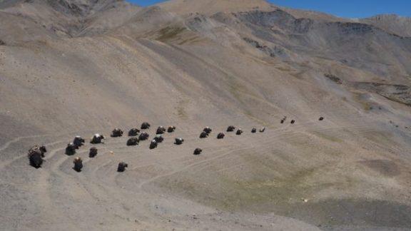A Laden Yak Caravan Crossing The Mo La Pass