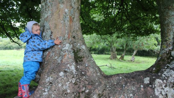 Barking Up The Right Tree  Near Loweswater