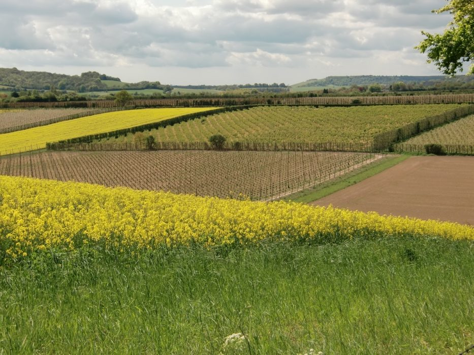 Typical scene of the Garden of England, near Canterbury