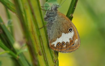 Just A Few Of The Many Superb Butterflies To Be Seen In The Auvergne4