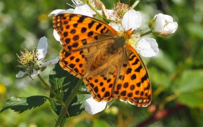Just A Few Of The Many Superb Butterflies To Be Seen In The Auvergne8