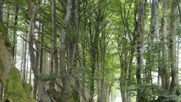 An Avenue Of Tortuous Beeches Lining The Sorcerers Way
