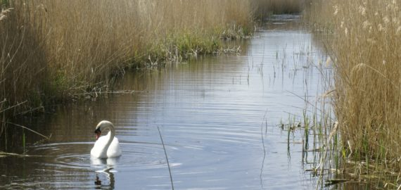 Stodmarsh Nature Reserve Makes For Interesting Walks Among The Reedbeds