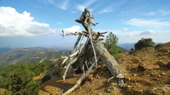 837 Sp6 Walking in Cyprus