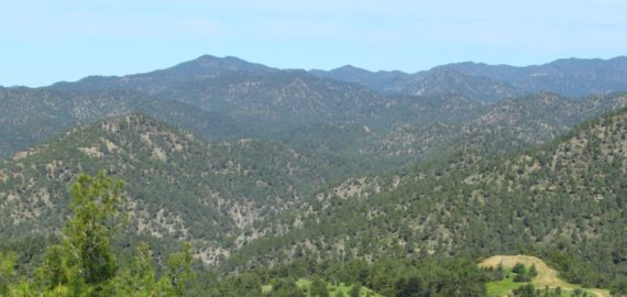 Pine Covered Mountains Cover