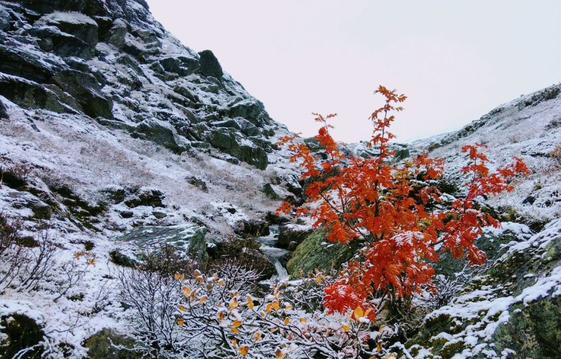 Last Of Autumn In Dumdalen