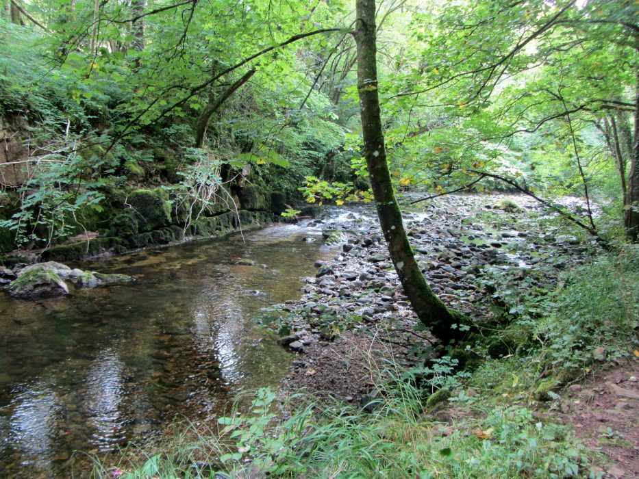 River Caldew In Dentonside Wood