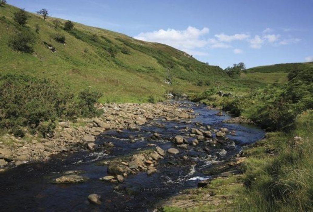 Beyond Springs Wood, the path briefly closes with Leck Beck (Walk 25)