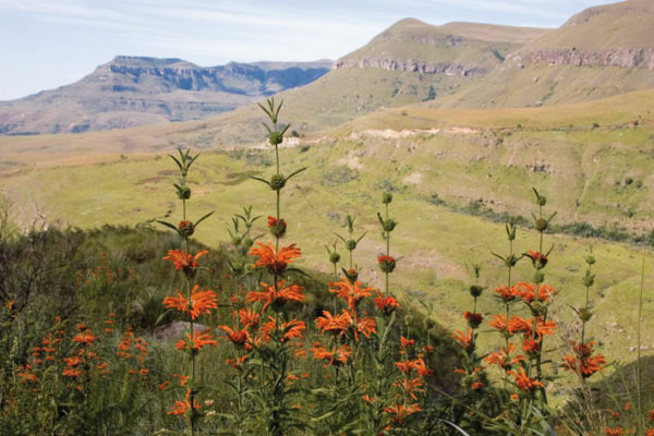 Go walking in the Drakensberg with a Cicerone guidebook